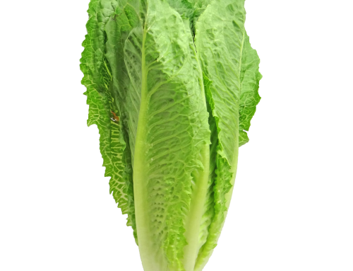 CDC says romaine E. Coli scare over